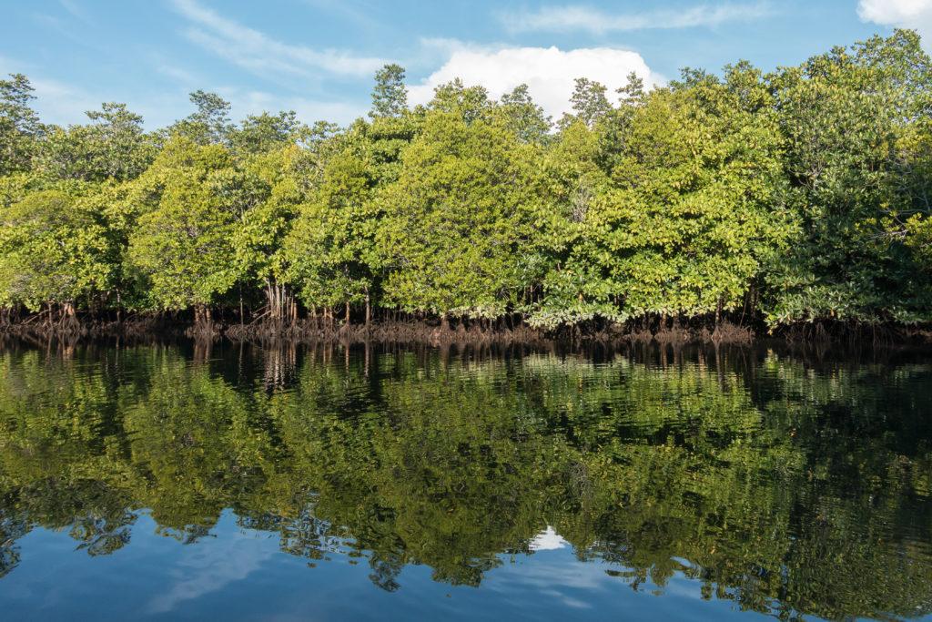 Mangroves in Tangkoko