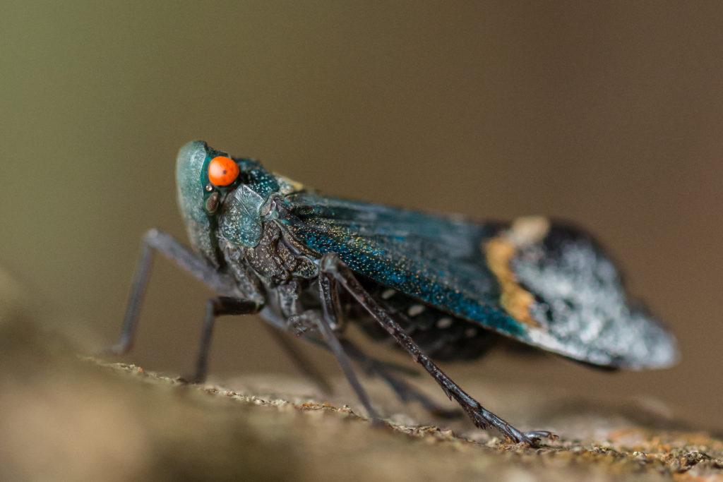 Insect in Tangkoko National Park