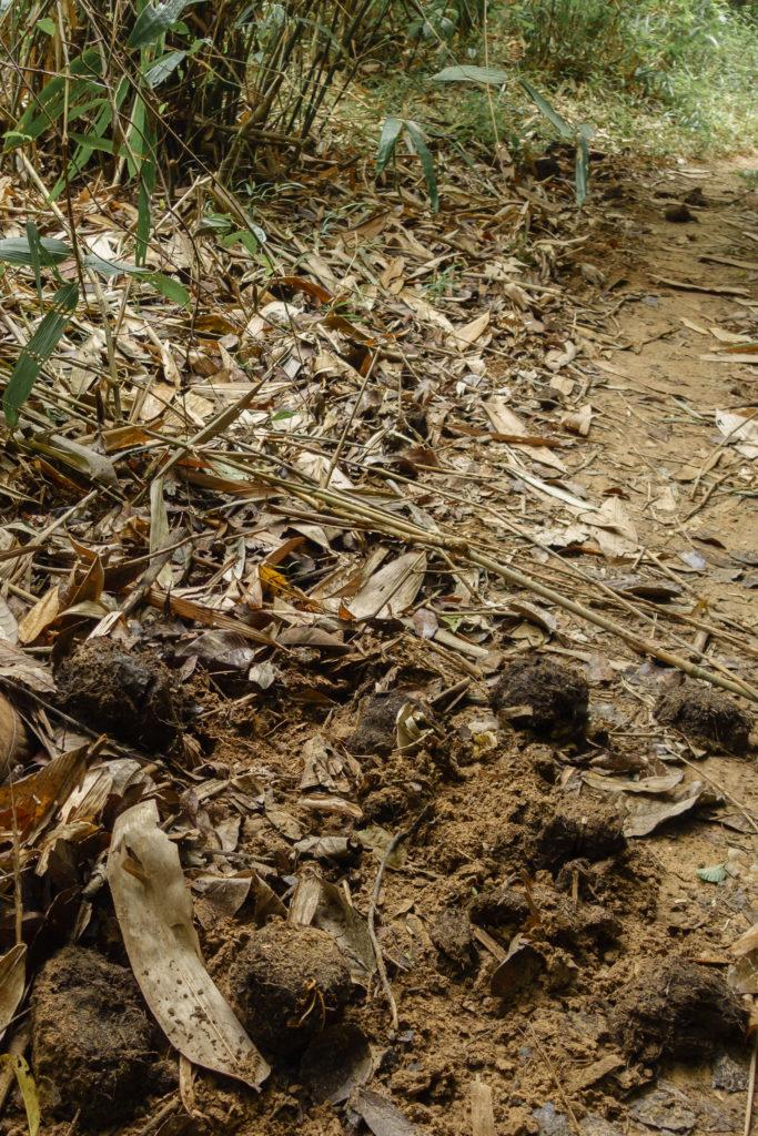Elephant dung in Endau Rompin