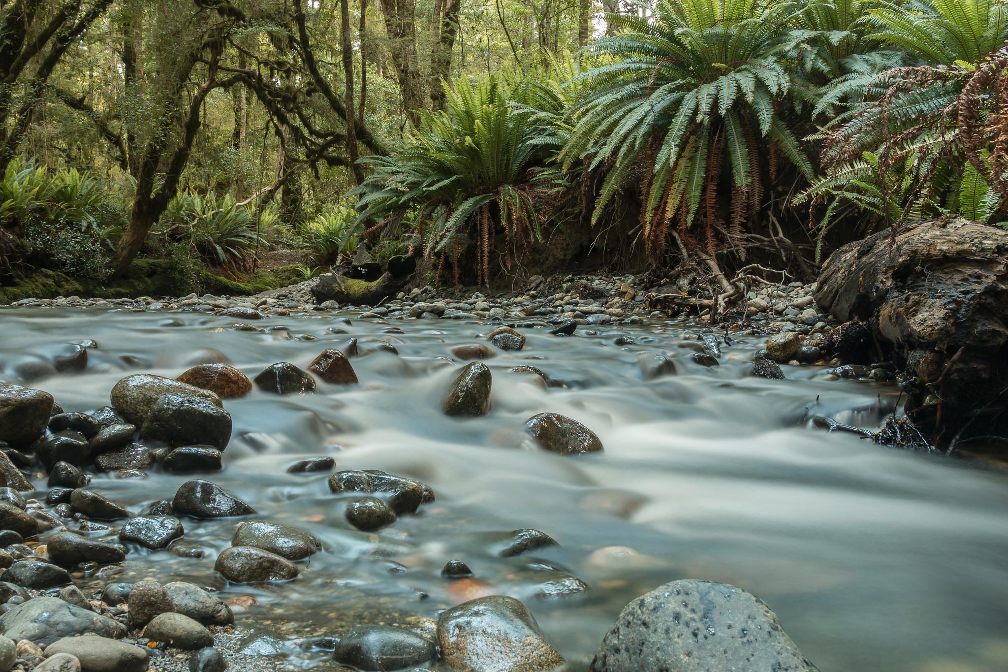 Kepler Track, Fiordland, New Zealand