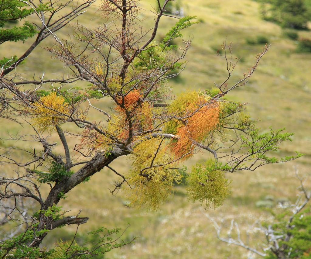 Colourful tree in Torres del Paine