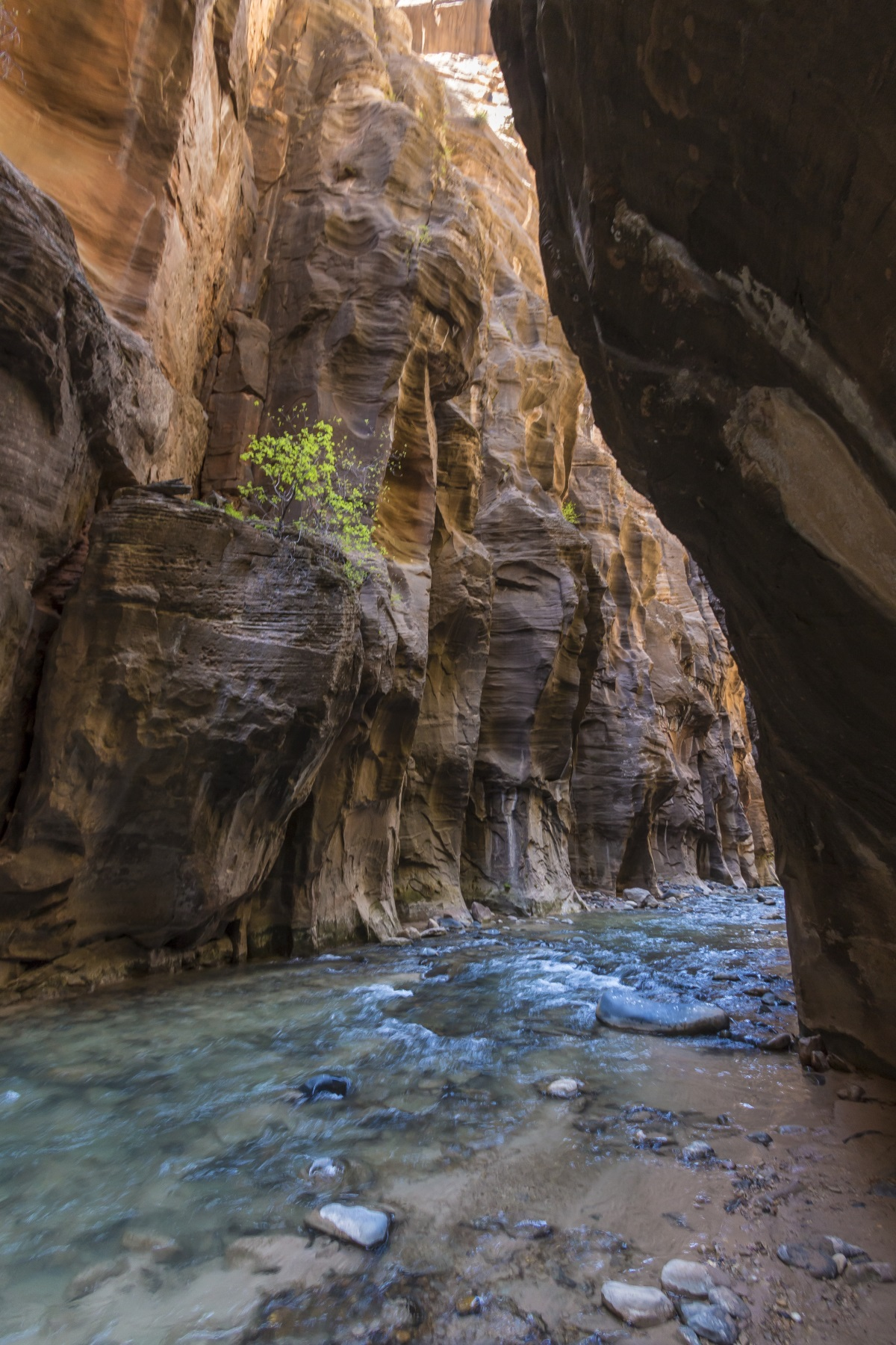 Wall street section of the Narrows