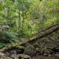 Manembo Nembo Nature Reserve