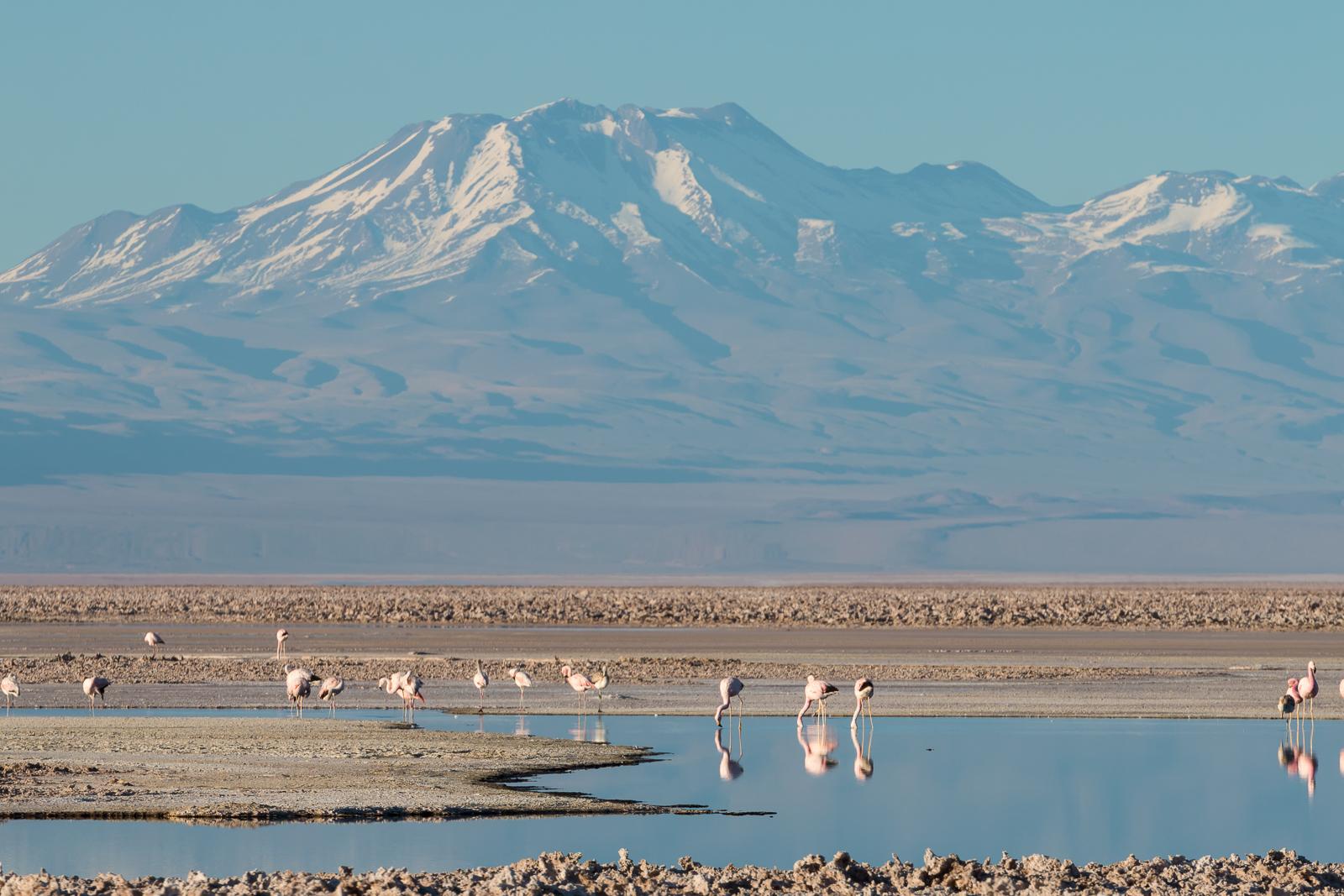 Lagunas Altiplanicas - Atacama desert, Chile
