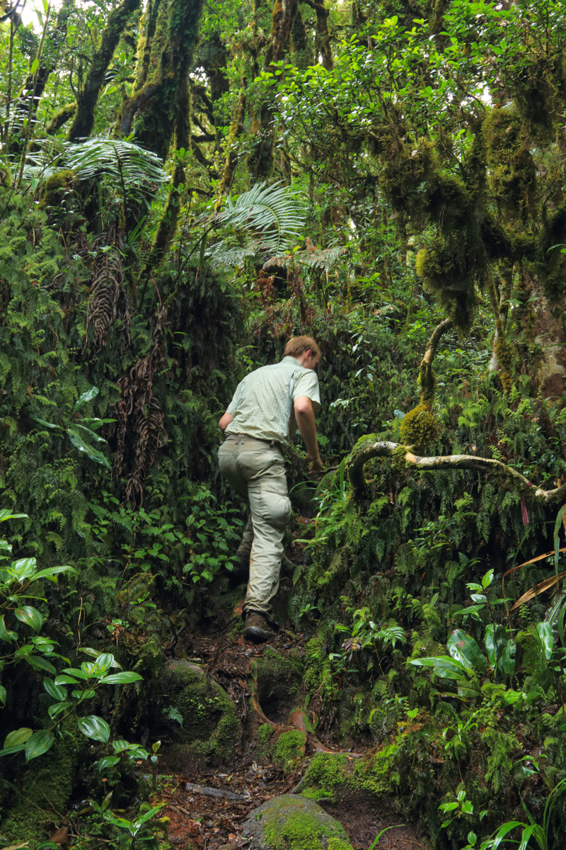 Cloud forest in Celaque National Park