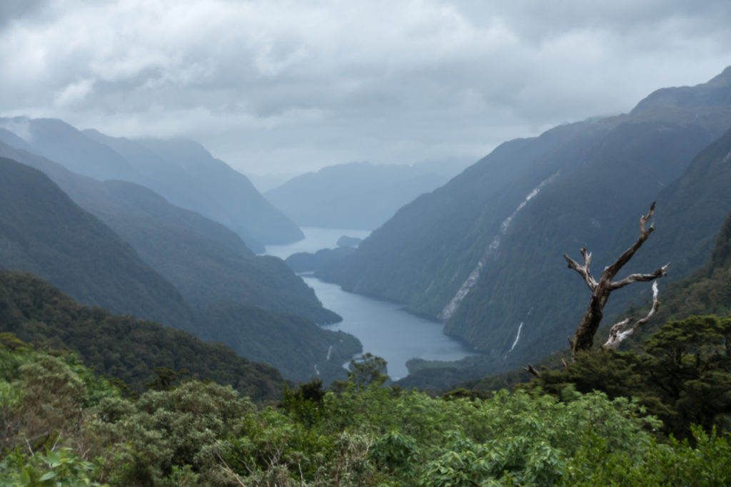 Doubtful Sound landscape