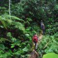 Hiking in Endau Rompin