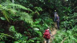 Hiking in Endau Rompin