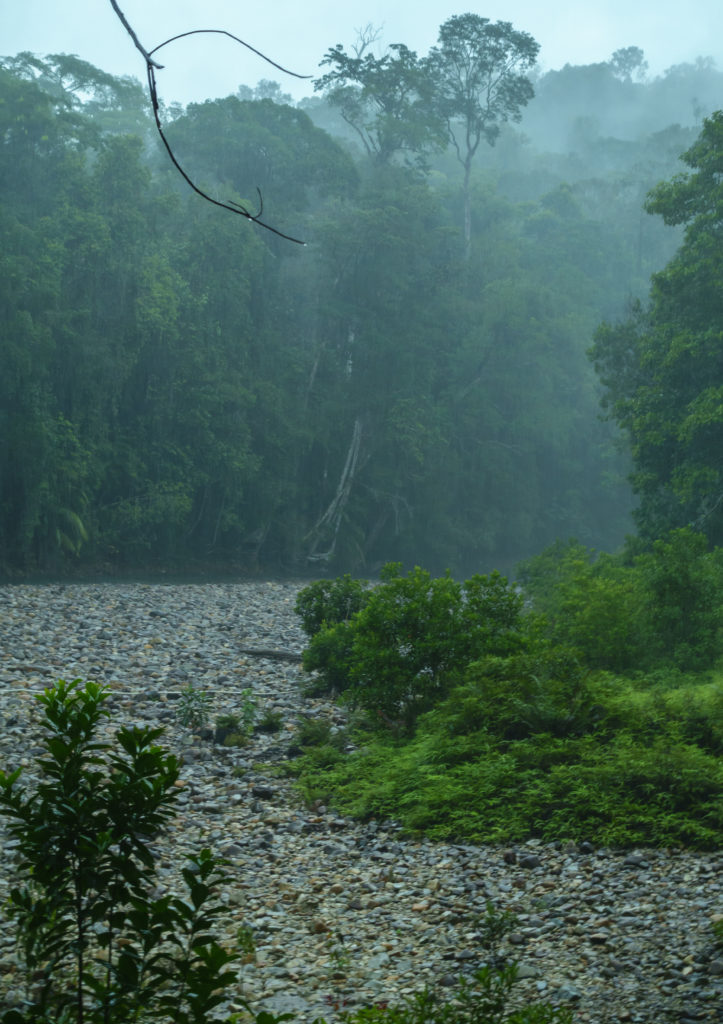 Endau Rompin rain