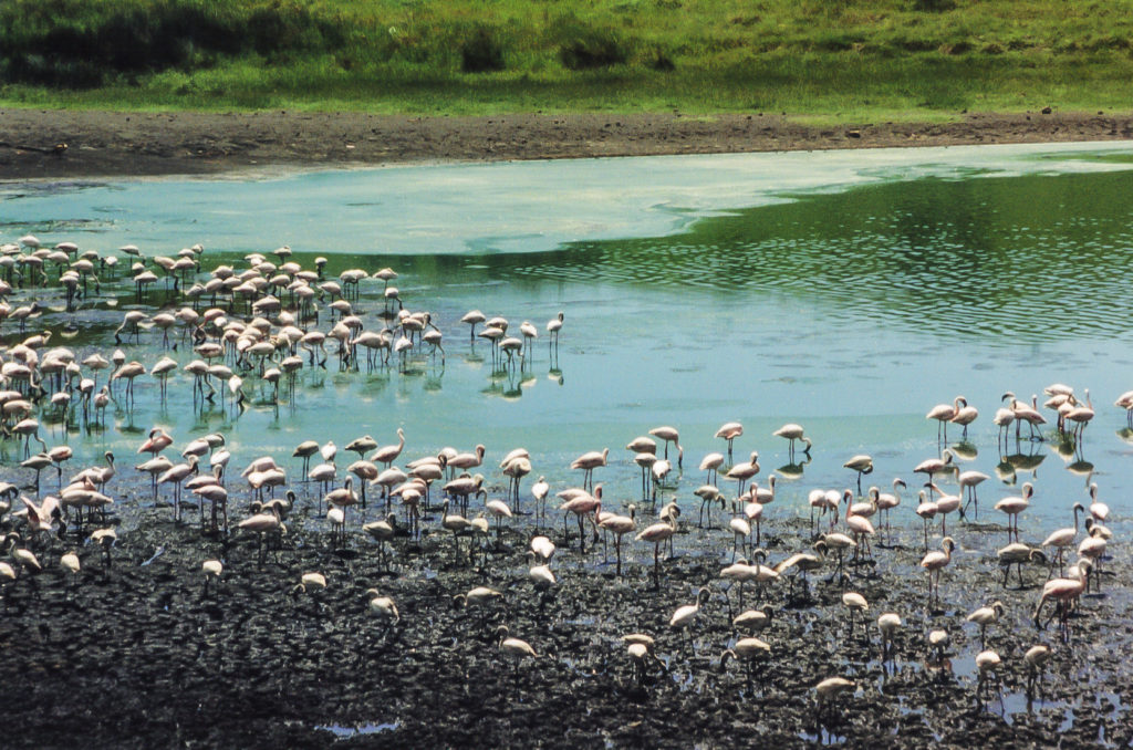 Flamingo lake, Arusha National Park