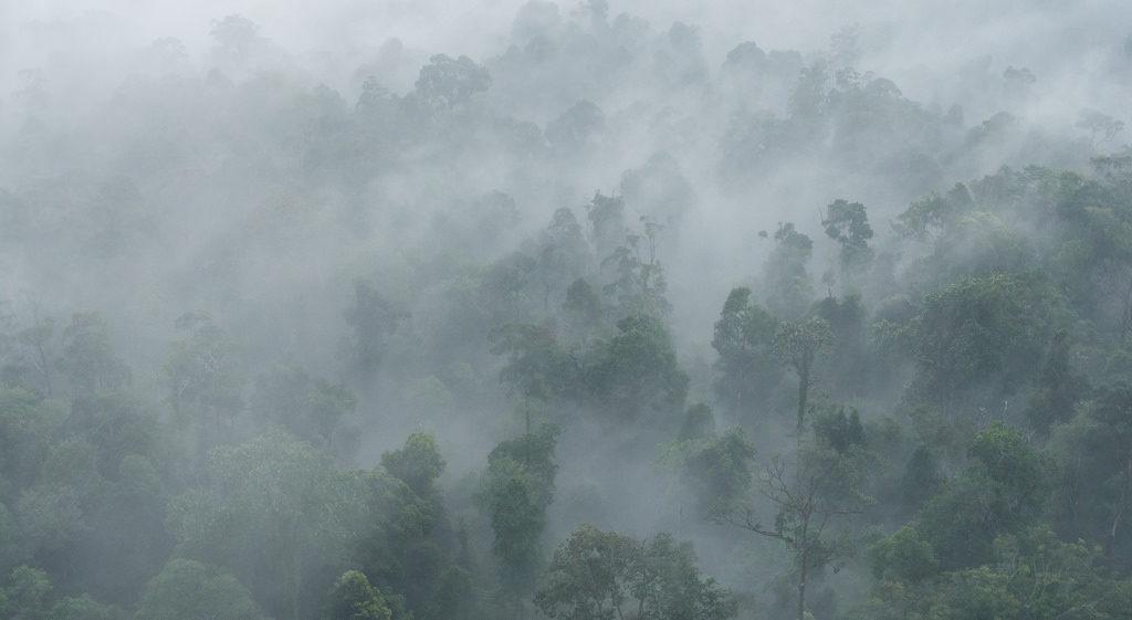 Gunung Panti hike