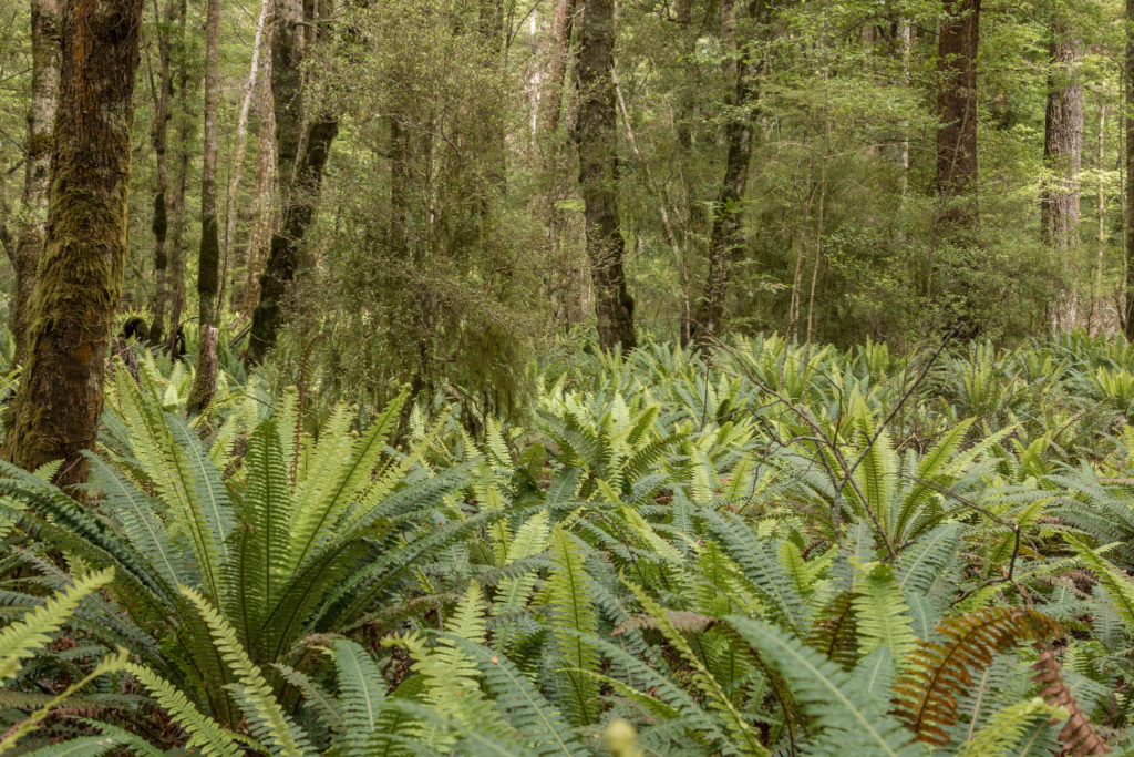 Kepler track forest