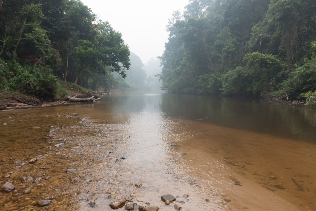 Jungle river in Taman Negara