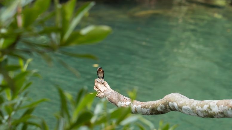 Bird in MacRitchie Reservoir Park