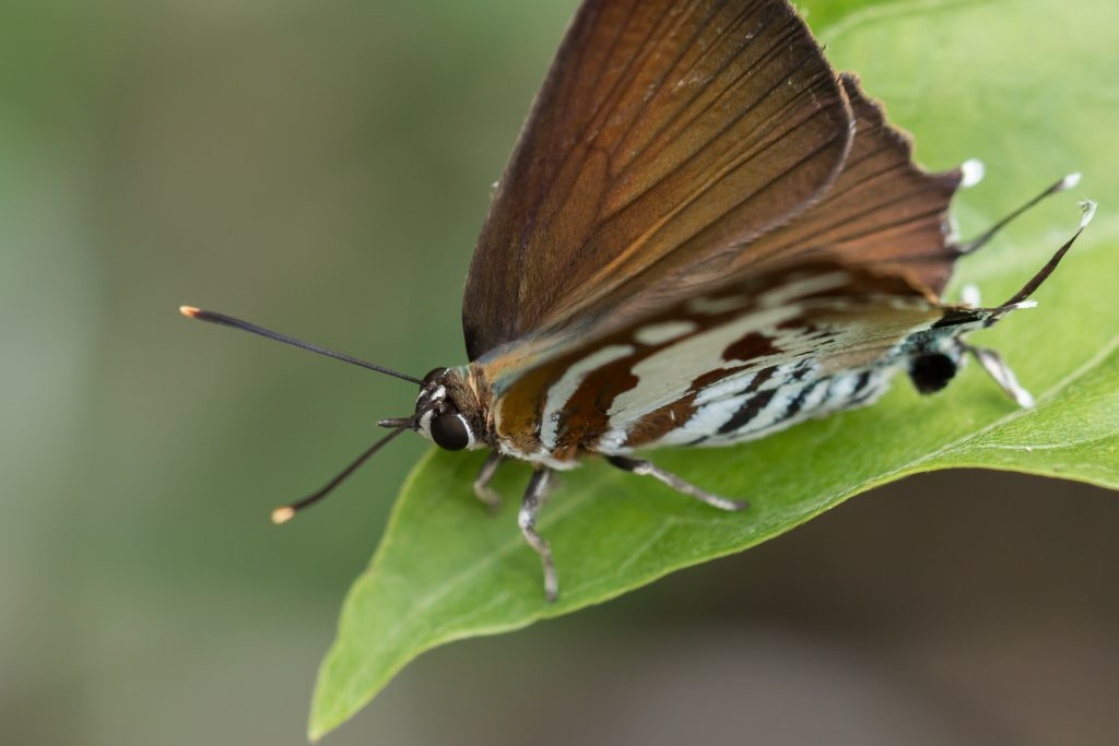 Butterfly in MacRitchie Reservoir Park