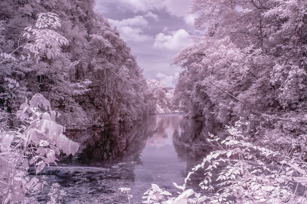 Infrared IR photo of MacRitchie Reservoir Park