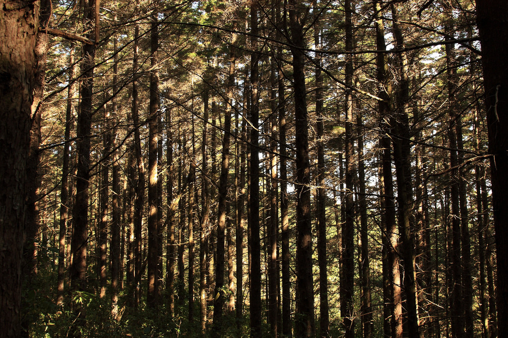 Forest in Montecristo National Park