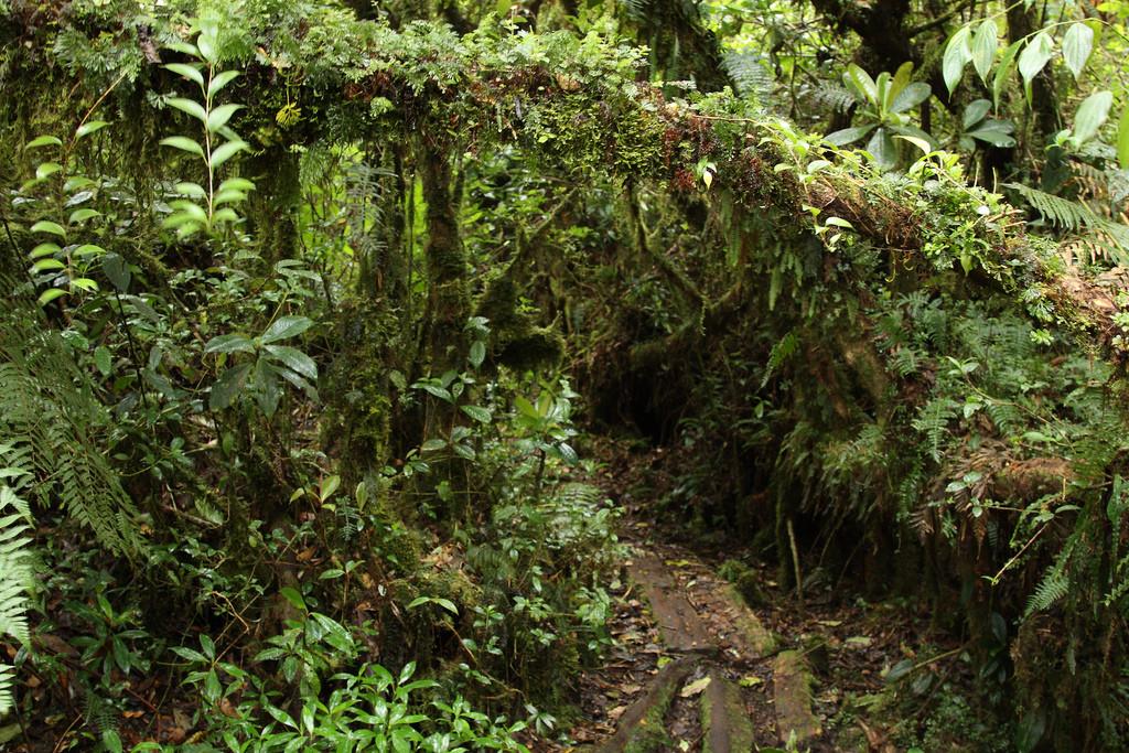 Summit hiking trail in Montecristo National Park