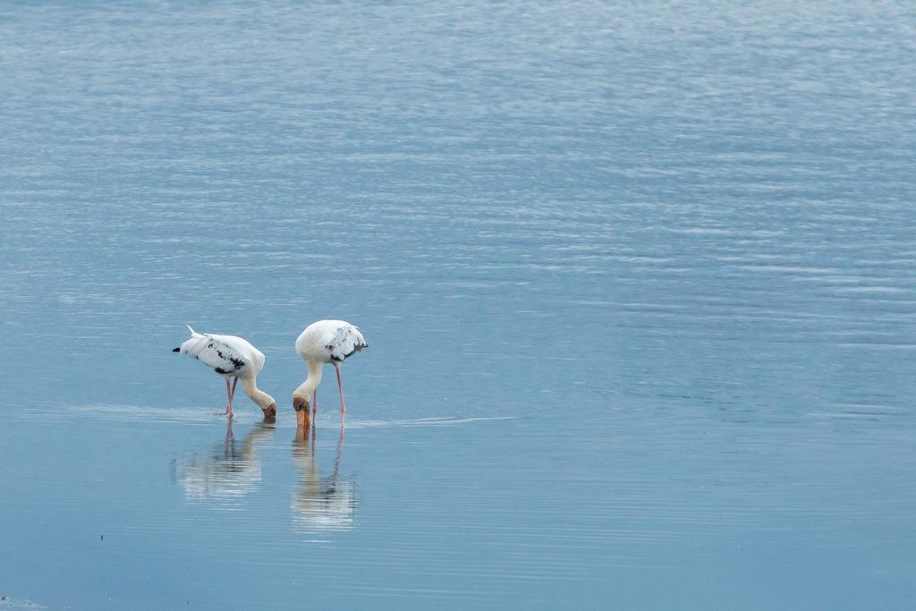 Sungei Buloh birds