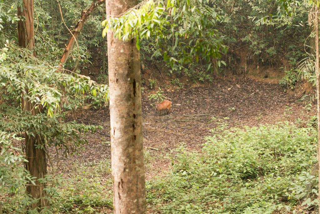 Tabing hide, Taman Negara